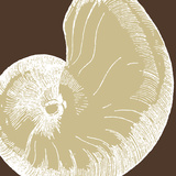 Natural Shell II Prints by N. Harbick