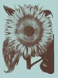 Sunflower, no. 18 Prints