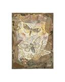Honeycomb Pussmoths Giclee Print by Annabel Hewitt