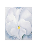 White Pansy, c.1927 Prints by Georgia O&#39;Keeffe