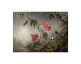 Passion Flowers and Hummingbirds, about 1870-83 Prints by Martin Johnson Heade