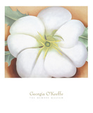 White Flower on Red Earth, No. 1, c.1946 Poster von Georgia O'Keeffe