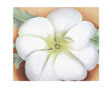 White Flower on Red Earth, No. 1, c.1946 Art by Georgia O'Keeffe