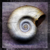 Moon Snail Prints by John Golden