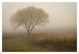 Tree in Field Prints by David Winston