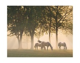 Horses in the Mist Posters by Monte Nagler