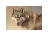 Wolf Portrait Giclee Print by Kalon Baughan