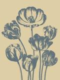 Tulip, no. 1 Prints