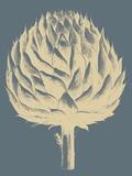 Artichoke, no. 2 Prints by  Botanical Series