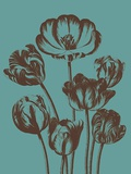 Tulip, no. 5 Prints