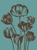 Tulip, no. 5 Prints