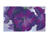 Petunias, c.1925 Prints by Georgia O&#39;Keeffe