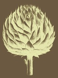 Artichoke, no. 4 Art by  Botanical Series