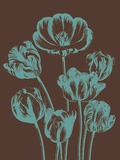 Tulip, no. 6 Prints