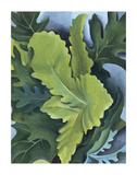 Green Oak Leaves, c.1923 Prints by Georgia O&#39;Keeffe