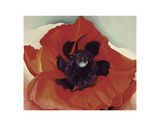 Poppy, c.1927 Prints by Georgia O'Keeffe