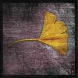 Ginkgo IV Art by John Golden