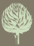 Artichoke, no. 12 Prints