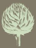 Artichoke, no. 12 Prints by  Botanical Series