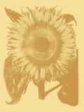 Sunflower, no. 19 Poster