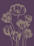 Tulip, no. 13 Prints by  Botanical Series