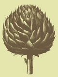 Artichoke, no. 3 Posters by  Botanical Series