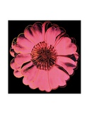 Flower for Tacoma Dome, c. 1982 (black &amp; pink) Poster par Andy Warhol