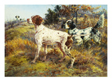 A German-Short Haired Pointer and Two Setters in a Landscape Giclee Print by Edmund Henry Osthaus