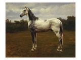 A Grey Camarguen Stallion in a Clearing Giclee Print by Rosa Bonheur