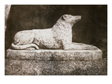 Effigy of Sir Walter Scott's Favourite Dog, Maida Premium Giclee Print by William Henry Fox Talbot
