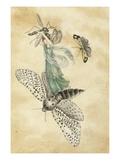 A Fairy Standing on a Moth While Being Chased by a Butterfly Poster by Amelia Jane Murray