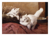 White Persian Kittens with a Bee Print by Arthur Heyer
