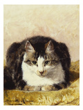 Sitting Pretty Giclee Print by Henriette Ronner-Knip