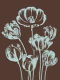 Tulip, no. 17 Prints