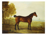 The Chestnut Hunter 'Berry Brown' in a Field by an Estuary, with Sailing Ships in the Distance Giclee Print by Benjamin Marshall