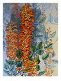 Australian Flower Print by Marian Ellis Rowan