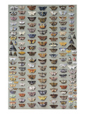 One Hundred and Sixty Six Moths Belonging to Several Families, But Mostly Noctuidae and Geometridae Giclee Print by Marian Ellis Rowan