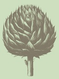 Artichoke, no. 11 Prints