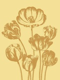 Tulip, no. 19 Art