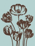 Tulip, no. 18 Prints