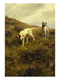 Two Setters Pointing at Quail Premium Giclee Print by Percival L. Rosseau