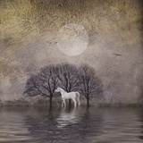 White Horse in Pond Posters by Dawne Polis