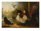 A Turkey, a Duck and Poultry in an Ornamental Garden Giclée-tryk af Marmaduke Cradock