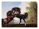 Stallions Fighting Poster by George Stubbs