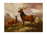A Proud Stag Giclée-tryk af Samuel John Carter