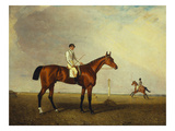 A Bay Racehorse with a Jockey Up on a Racehorse Giclee Print by Lambert Marshall