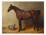 A Bay Hunter and a Spotted Dog in a Stable Interior Art by John Frederick Herring I