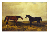The Earl of Granards's Bright Bay Filly and Dark Bay Stallion Standing in an Extensive Landscape Prints by William Luker
