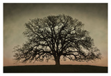 Majestic Oak Print by David Winston