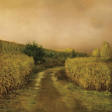 Sunset Cornfield Poster by Dawne Polis